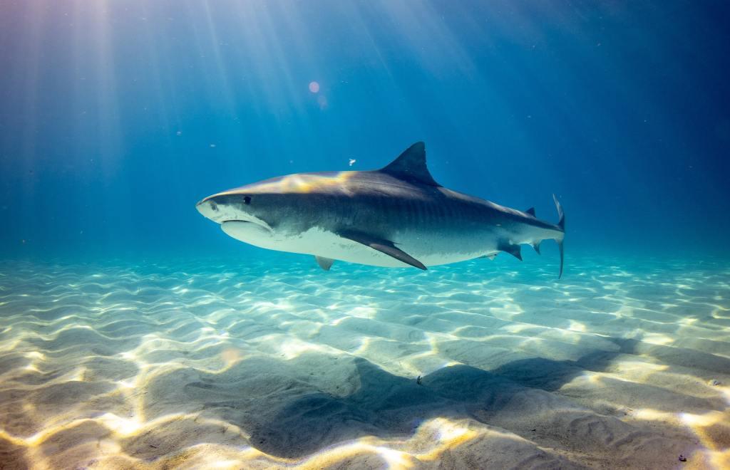 Haifisch Filme