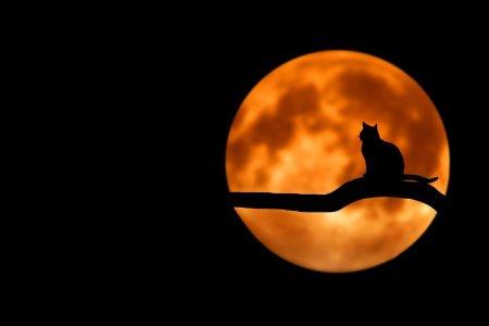 Comment voir les couleurs la nuit ? Dans nos yeux, nous avons des cônes et des batonnets