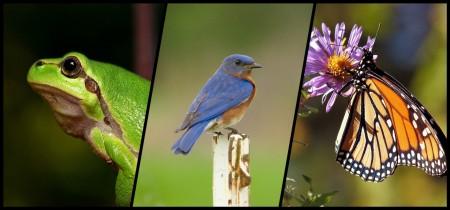 Grenouille, oiseau et papillon.