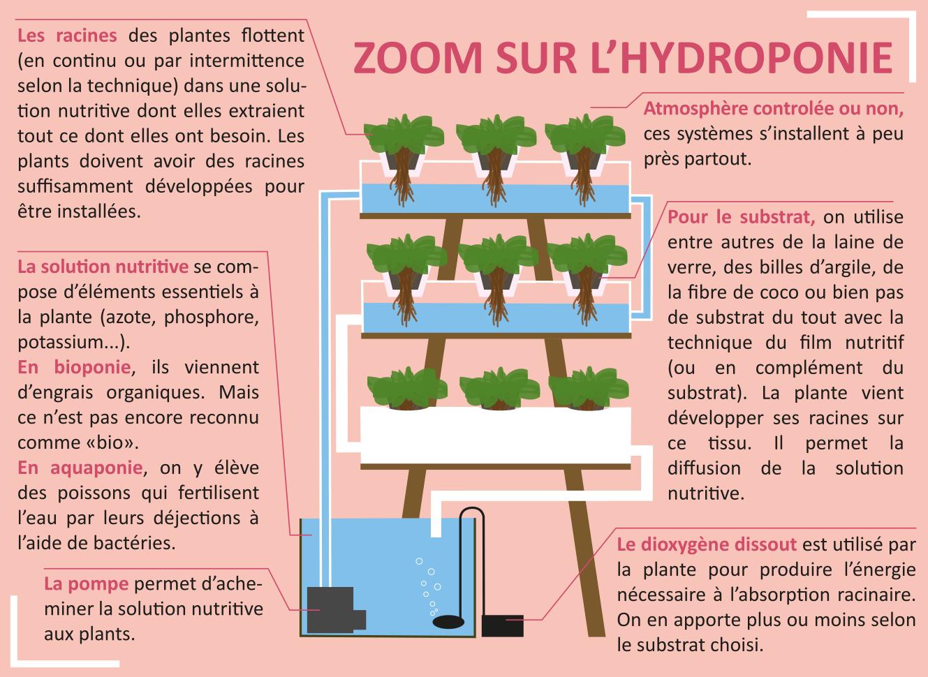 Zomme sur l'hydroponie. Infographie par Laurène Sarradin.
