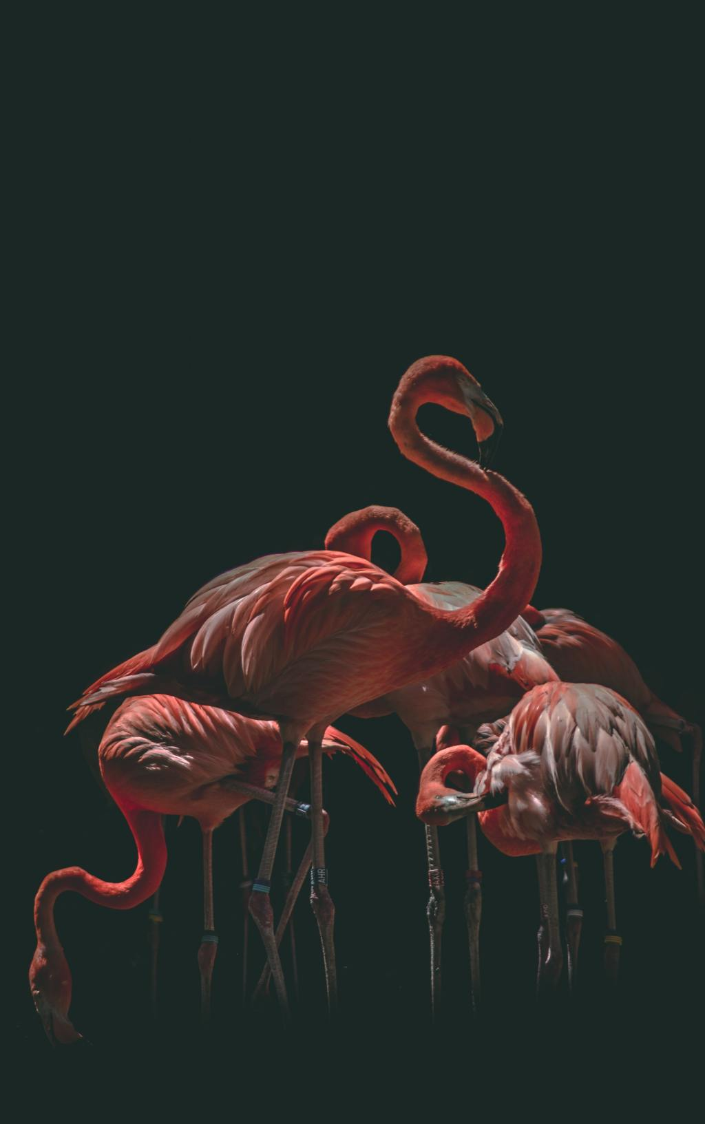 Flamants roses. Par Marko Blažević, https://unsplash.com/photos/hcVtC5pgZTY