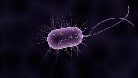 Bactérie, vue d'artiste. Par sbtlneet / https://pixabay.com/fr/illustrations/bact%C3%A9ries-bact%C3%A9rie-microbiologie-1832824/