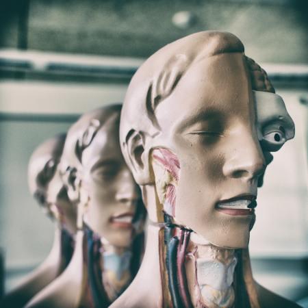 Tête de modèle du corps humain. Par Pierre Acobas / https://unsplash.com/photos/nbD0VmKnPrI